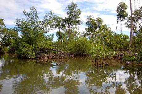 Lasy mangrowe na Dominikanie